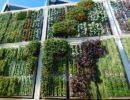 Jardín vertical y tronco de plátanos para cultivar