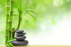 Cómo cuidar tu bambú de la suerte, los mejores consejos